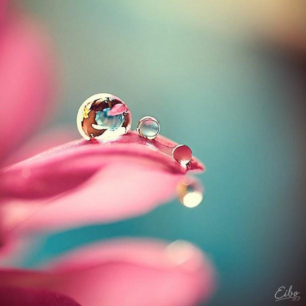 colour-flower-macro-photography-Favim.com-1427125