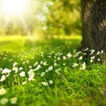 new_spring-276014_1280